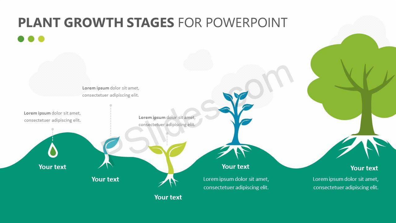 Plant Growth Stages Diagram for PowerPoint - Pslides