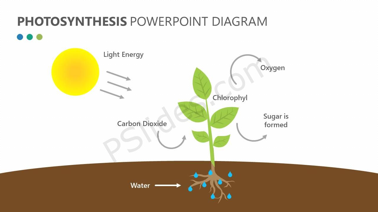 Photosynthesis powerpoint diagram pslides photosynthesis powerpoint diagram ccuart Gallery