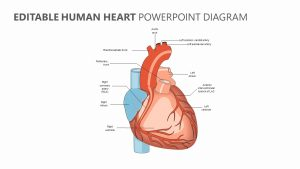 Editable Human Heart PowerPoint Diagram